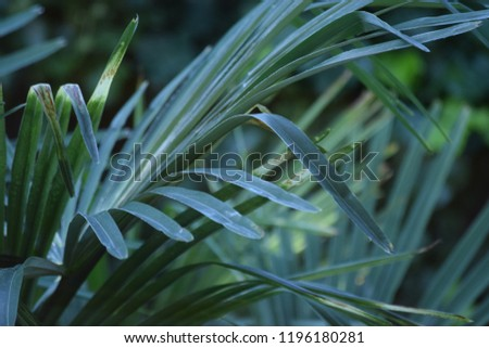 Im Garten Stock Photo Edit Now 1196180281 Shutterstock