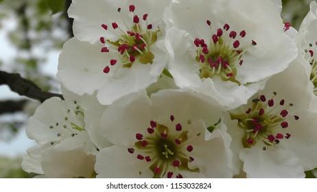 Weiße Blüten im Macroformat