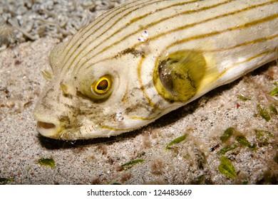 Manik�¼re im Meer