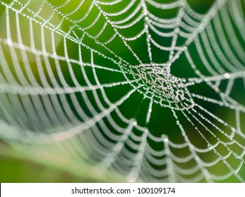 The spider web (cobweb) closeup background.