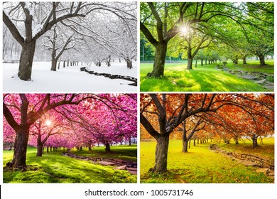 Cuatro estaciones con cerezos japoneses en Hurd Park, Dover, Nueva Jersey