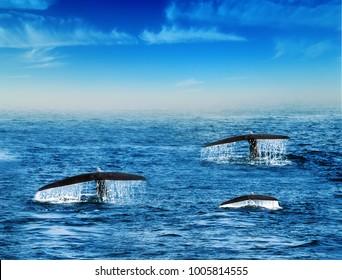 ザトウクジラの尾のスプラッシュとドロップは、スリランカのセイロン沖の背景の青い空に水を落とします。