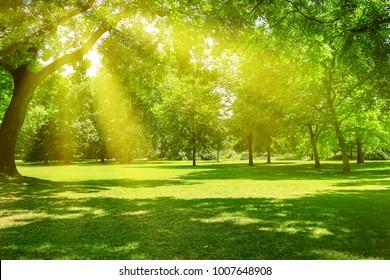 Sonnenaufgangsstrahl im schönen Park