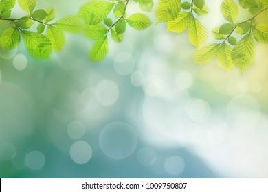 Frühlingshintergrund, grüner Baum verlässt auf unscharfem Hintergrund