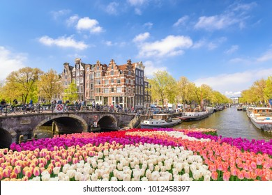 Amsterdam Niederlande, Stadtskyline am Kanalwasser mit Frühlingstulpenblume