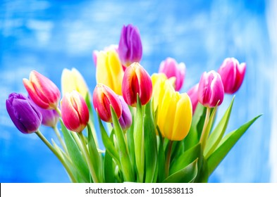 Colorful tulip flowers on a blue background with a copy space for a text. Top of view. Blue sky background. Valentines gift and celebration concept.