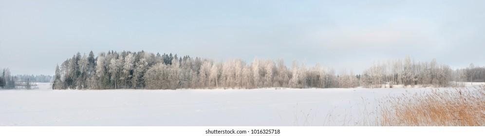 白い雪と湖のフィールドの氷と寒い冬の明るい晴れた日の草と海岸の森の木の霜澄んだ青い空の光