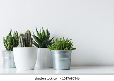 Colección de varios cactus y plantas suculentas en diferentes macetas. Plantas de la casa de cactus en maceta en el estante blanco contra la pared blanca.