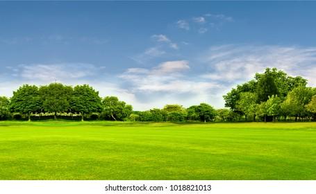 Grünes Feld, Baum und blauer Himmel. Großartig als Hintergrund, Web-Banner