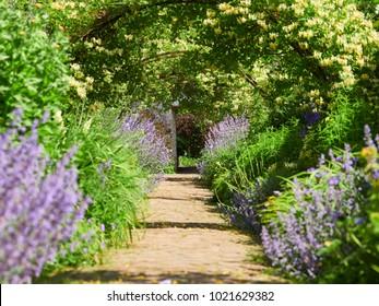 Kamperfoelie bogen over een tuinpad op een zonnige dag in een Engels land Garden, UK.