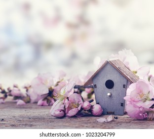 Wooden feeder with flowering tree. Spring background.