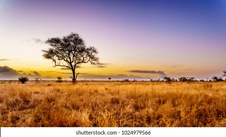 Sunrise over the savanna and grass fields in central Kruger National Park in South Africa