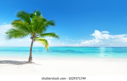 Palm en la playa, República Dominicana