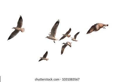 Bandada de pájaros volando aislado sobre fondo blanco. Esto tiene trazado de recorte.