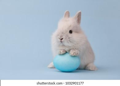青い背景に青い塗られた卵をイースターのウサギ。イースター休暇の概念。