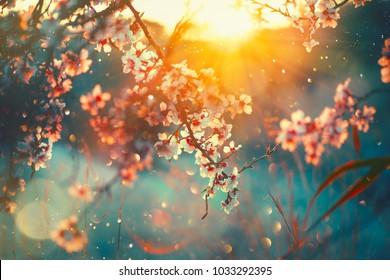 春の花の背景。咲く木と太陽フレアの美しい自然シーン。晴れた日。春の花。美しい果樹園。抽象的なぼやけた背景。春