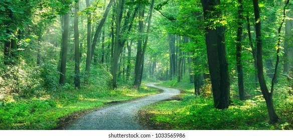 Kronkelende onverharde weg door zonnig groen bos verlicht door zonnestralen door mist