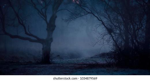 Ein nebliger und mysteriöser Wald, der im frühen Wintermorgenlicht auf dem leicht gefrorenen Boden zittert