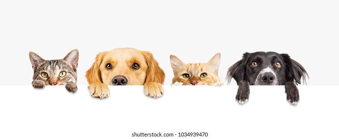 空白の白い看板をのぞきながら、足を上げた猫と犬の頭のてっぺんの列。Webバナーまたはソーシャルメディアカバー用のサイズ