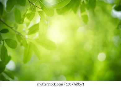 Nahaufnahme Naturansicht des grünen Blattes auf unscharfem Grünhintergrund im Garten mit Kopienraum, der als Hintergrund natürliche grüne Pflanzenlandschaft, Ökologie, frisches Tapetenkonzept verwendet.