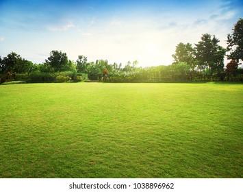 Campo de hierba verde natural en el amanecer