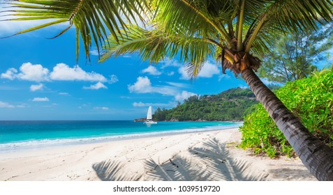 Schöner Sandstrand mit Palme und einem Segelboot im türkisfarbenen Meer auf Jamaica Paradise Island.