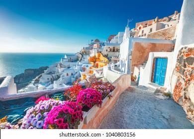 サントリーニ島、ギリシャ。手前に花が咲く小さな通りにある伝統的なキクラデスのサントリーニ島の家々の美しい景色。場所:ギリシャ、サントリーニ島のイア村。休暇の背景。