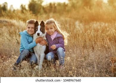 Tiempo familiar. Hermano y hermana caminan con una mascota. Perro joven de raza Husky siberiano. Prado de oro en los rayos del sol poniente.