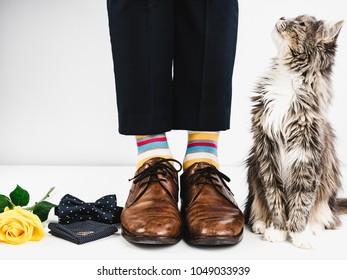 Nettes Kätzchen, gelbe Rose, Eheringe, Fliege, Männerbeine in hellen, gestreiften Socken und stilvollen braunen Schuhen auf einem weißen Hintergrund. Stil, Mode, Schönheit
