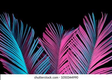Tropische und Palmblätter in lebendigen holographischen Neonfarben mit kräftigem Farbverlauf. Konzeptkunst. Minimaler surrealistischer Hintergrund.