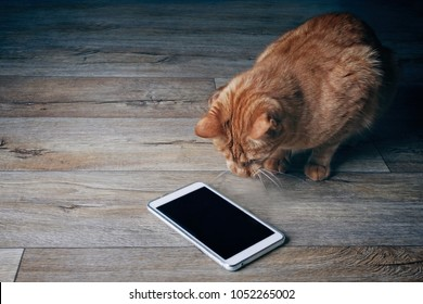 Ginger cat looks curious on a tablet computer who lies on a wooden floor.
