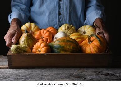 Granjero en su stand sosteniendo una caja de madera de verduras de otoño y calabazas y calabazas decorativas.