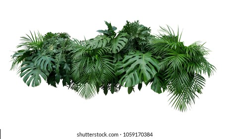 Tropischer Blattlaubpflanzen-Buschblumenanordnungsnaturhintergrund lokalisiert auf weißem Hintergrund, Beschneidungspfad eingeschlossen.