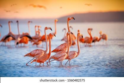 鮮やかな夕日のピンクのフラミンゴ