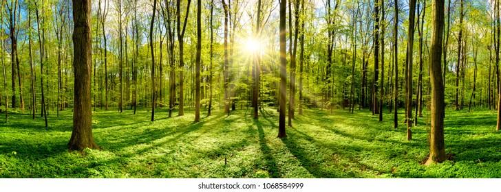 Schöner Wald im Frühling mit heller Sonne, die durch die Bäume scheint