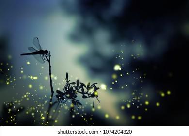 Abstraktes und magisches Bild der Libellensilhouette und des Glühwürmchenfliegens im Nachtwald. Märchenkonzept