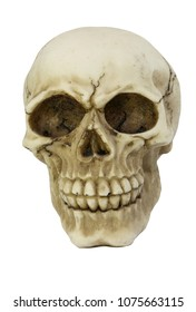 white skull with cracks with a white background