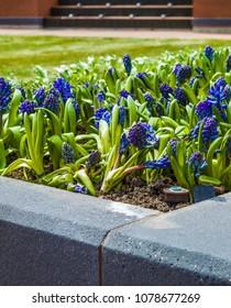 Flores delante de Wrigley Field