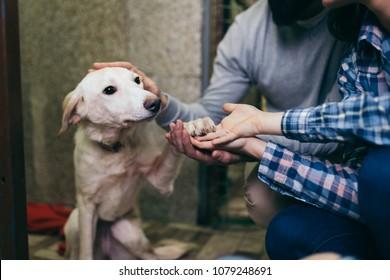 養子縁組のために犬を選ぶ動物保護施設の幸せな家族。