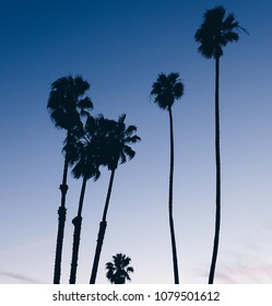 Santa Monica Palms im Sonnenuntergang. GTA schauen. Los Angeles.