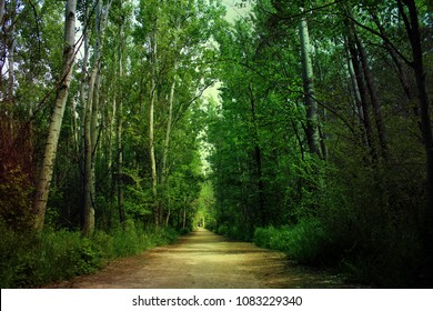 Green Forest in Lebanon - Taanayel Lake Nature Reserve