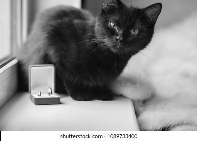 concepto de divorcio. gato negro y anillos de boda en el estuche. superstición. anillos de boda como símbolo del amor eterno