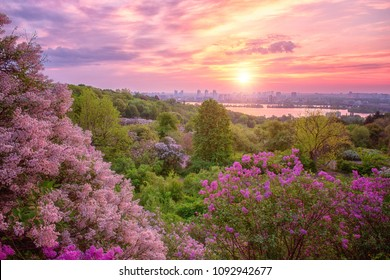 Botanical garden in Kyiv (Kiev) at sunrise. Amazing morning landscape with blossoming lilac, green trees, Dnieper river, city view and rising sun in colorful cloudy sky, Ukraine, Eastern Europe