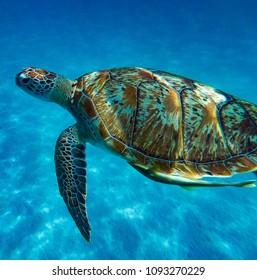 Een groene schildpad die langs het strand van het eiland Redang zwemt.
