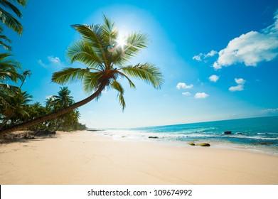 Unberührter tropischer Strand in Sri Lanka