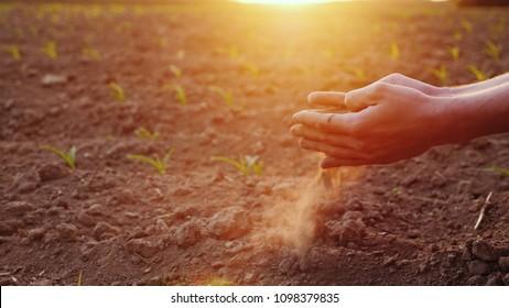 Las manos del joven agricultor mantienen la tierra fértil en el campo con plántulas de maíz. Concepto de productos orgánicos