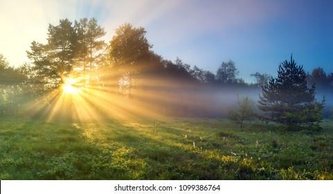 schöne Panoramalandschaft mit Sonne und Wald und Wiese bei Sonnenaufgang. Sonnenstrahlen scheinen durch Bäume. Panoramablick