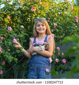 Portrait of a pretty girl with two cute little kittens in a garden with pink roses. Pet care
