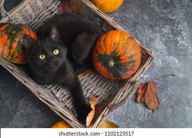 Schwarze Katze der grünen Augen und orange Kürbisse im Weidenkorb auf grauem Zementhintergrund mit herbstgelben trockenen gefallenen Blättern. Draufsicht Hintergrund.