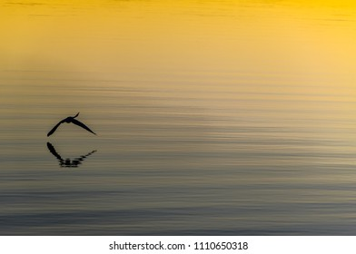 Sunset over the Noosa river with flying bird